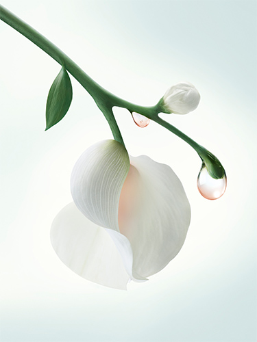 leaudisseypurenectardeparfum2