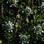 numero-flowerart