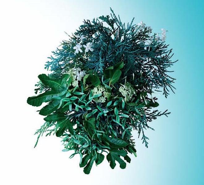 moltonbrown-cypress_2