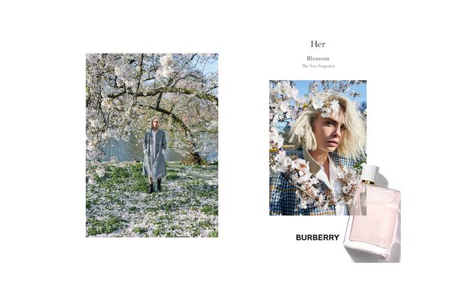burberryher-blossom